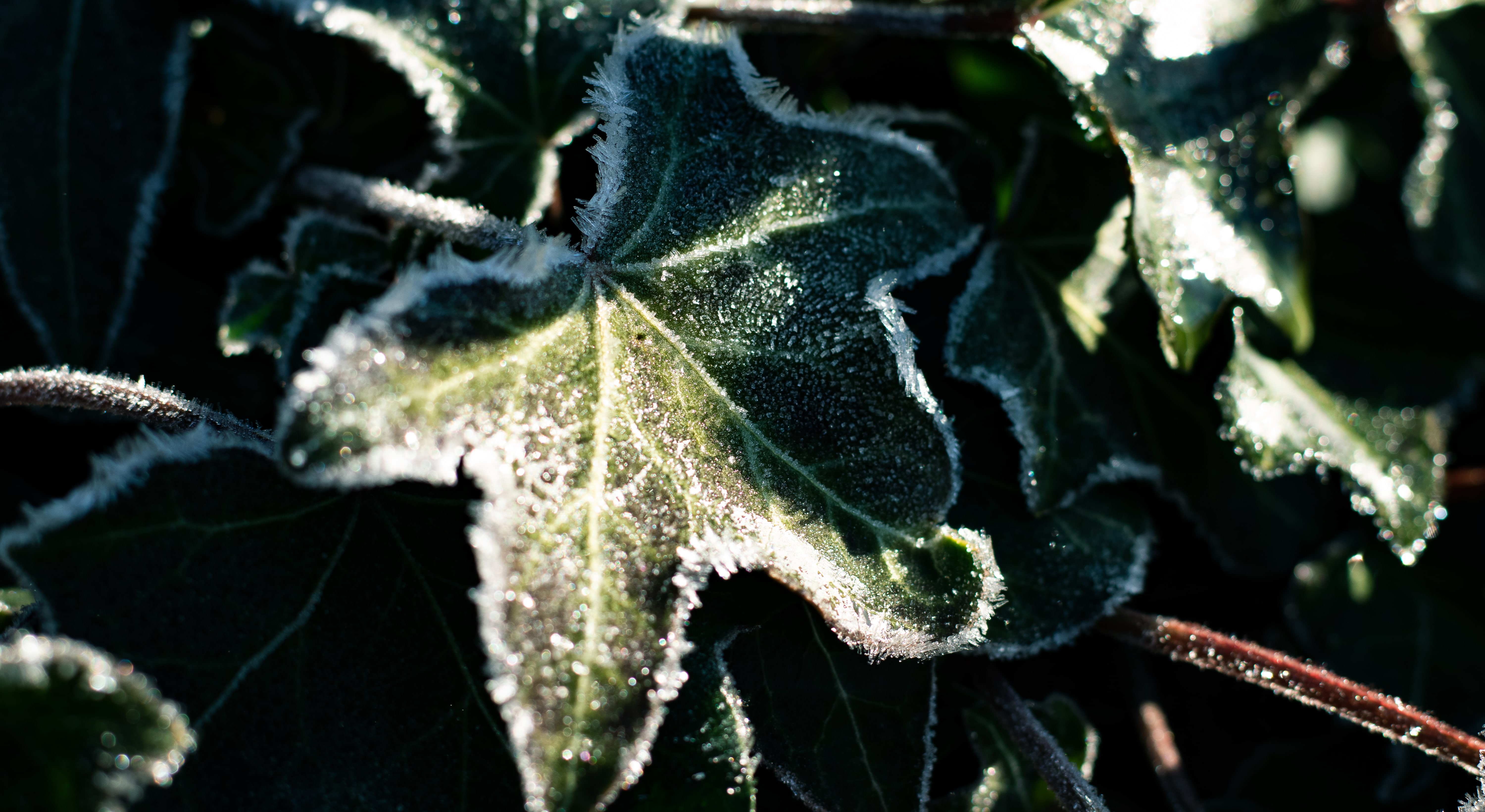 photographie nature hiver